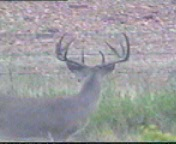 first_shot_rear_view_horns
